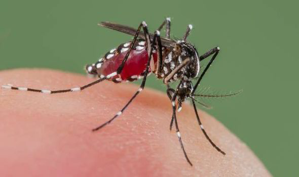 Dengue Treatment
